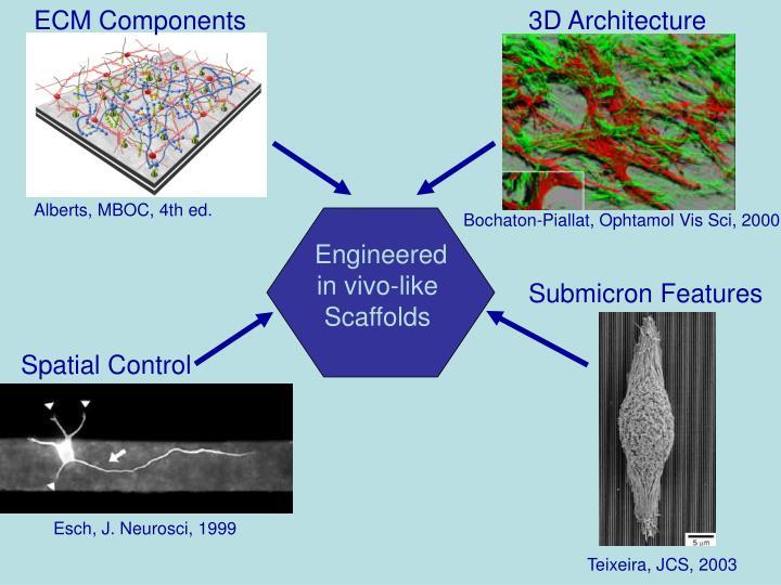 ECM Components
