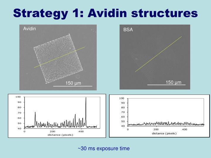 Strategy 1: Avidin structures