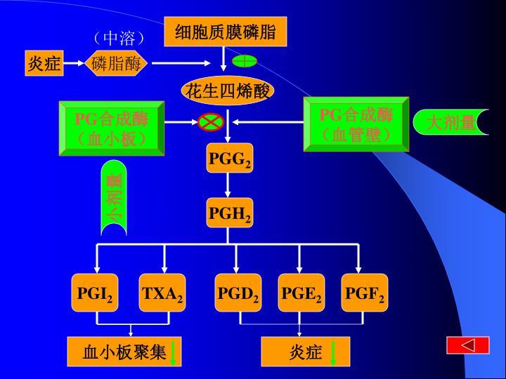 细胞质膜磷脂
