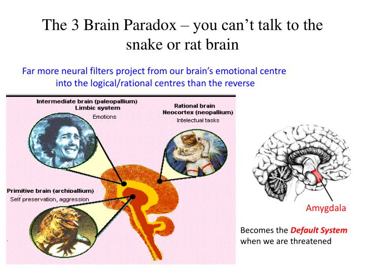The 3 Brain Paradox – you can't talk to the snake or rat brain