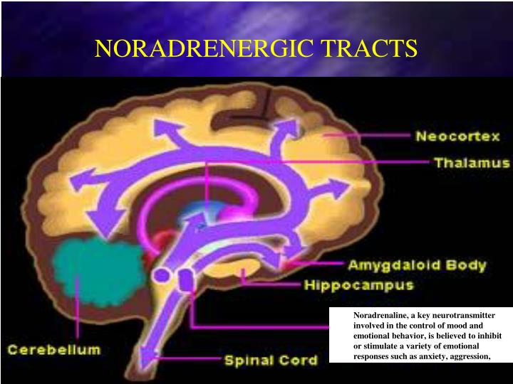 NORADRENERGIC TRACTS
