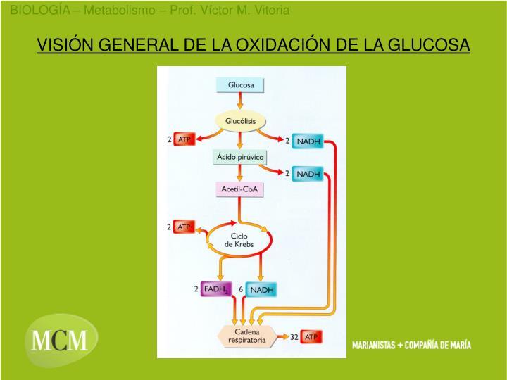 VISIÓN GENERAL DE LA OXIDACIÓN DE LA GLUCOSA