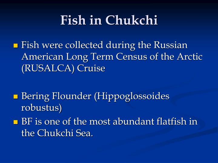 Fish in Chukchi