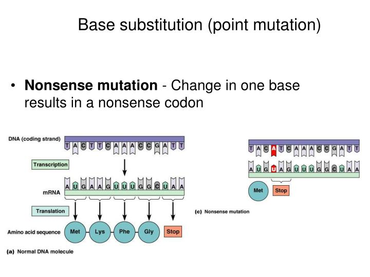 Base substitution (point mutation)