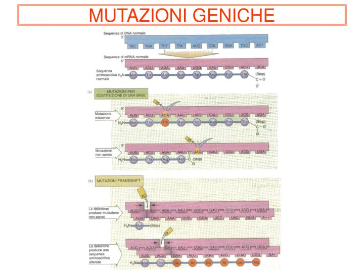 MUTAZIONI GENICHE