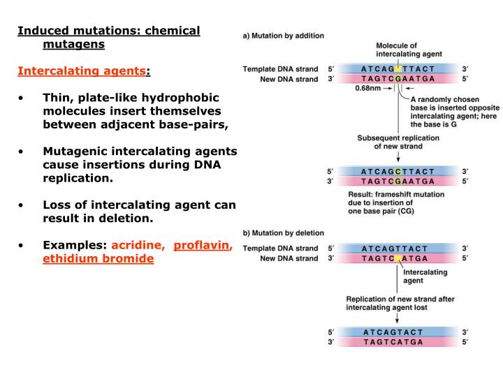 Induced mutations: chemical mutagens
