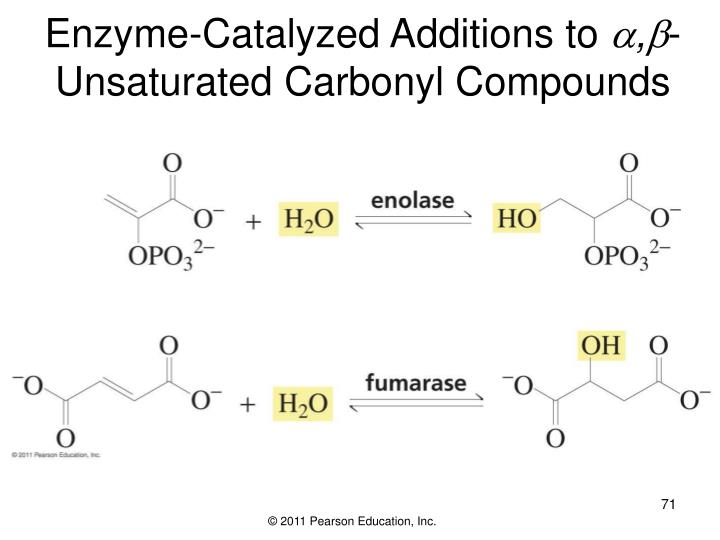 Enzyme-Catalyzed Additions to