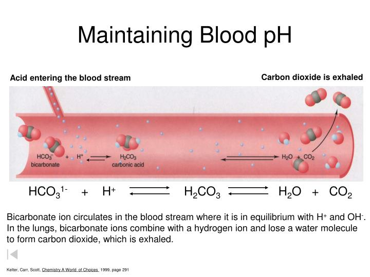 Maintaining Blood pH