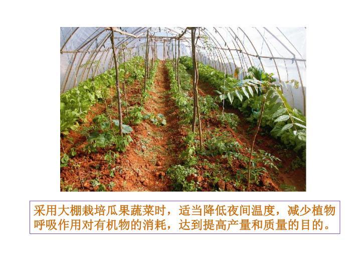 采用大棚栽培瓜果蔬菜时,适当降低夜间温度,减少植物