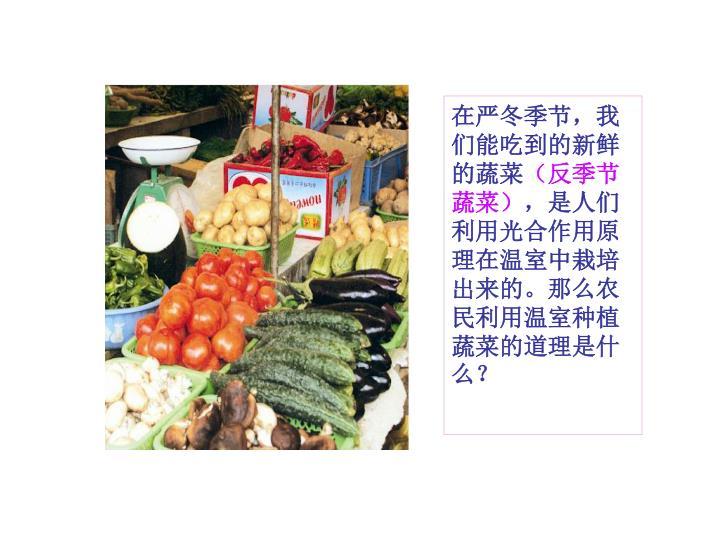 在严冬季节,我们能吃到的新鲜的蔬菜