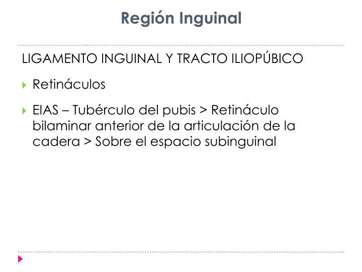 Región Inguinal