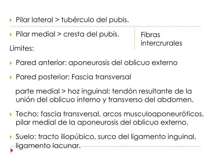 Pilar lateral > tubérculo del pubis.