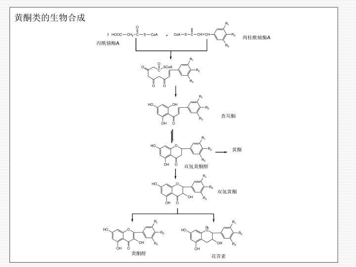黄酮类的生物合成