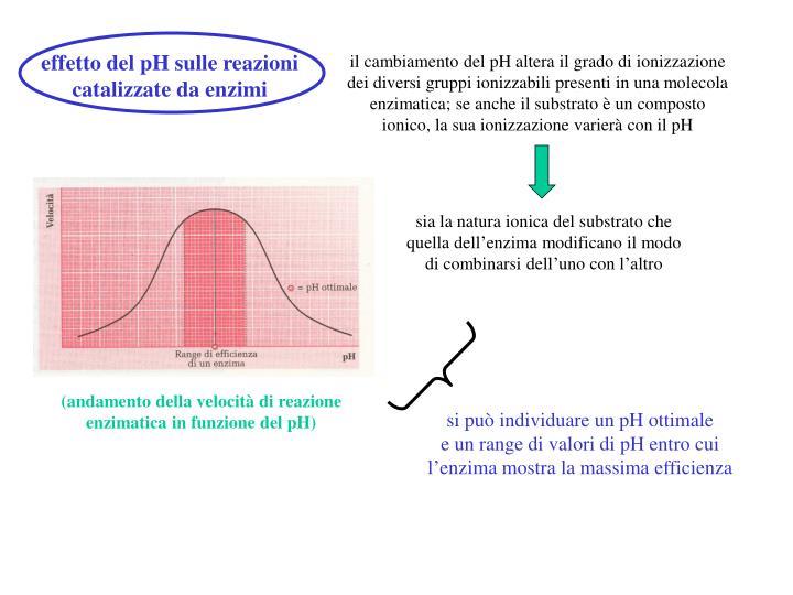 effetto del pH sulle reazioni