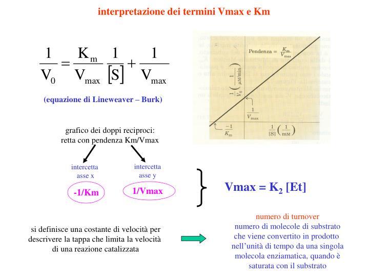 interpretazione dei termini Vmax e Km