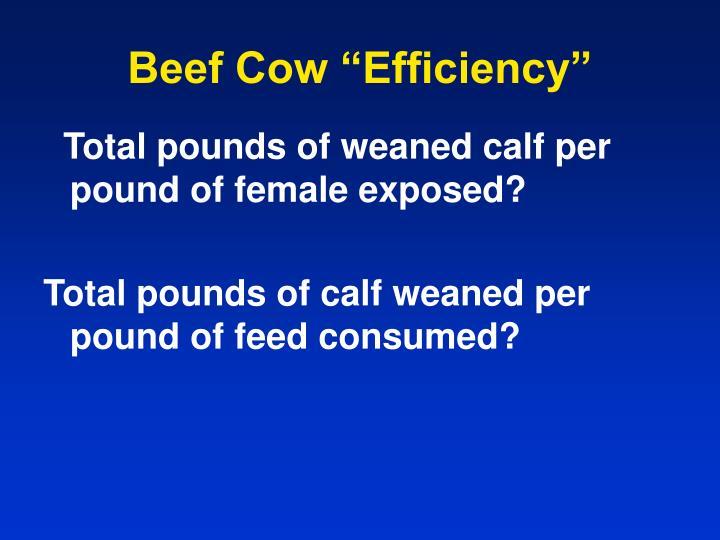 "Beef Cow ""Efficiency"""