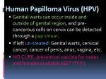 human papilloma virus hpv1