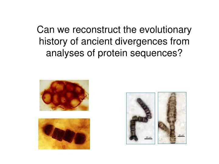 Can we reconstruct the evolutionary history of ancient divergences from analyses of protein sequences?