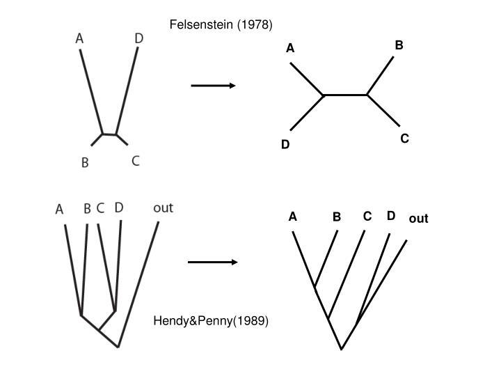 Felsenstein (1978)