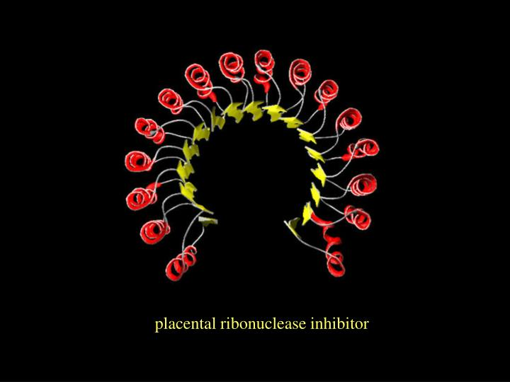 placental ribonuclease inhibitor