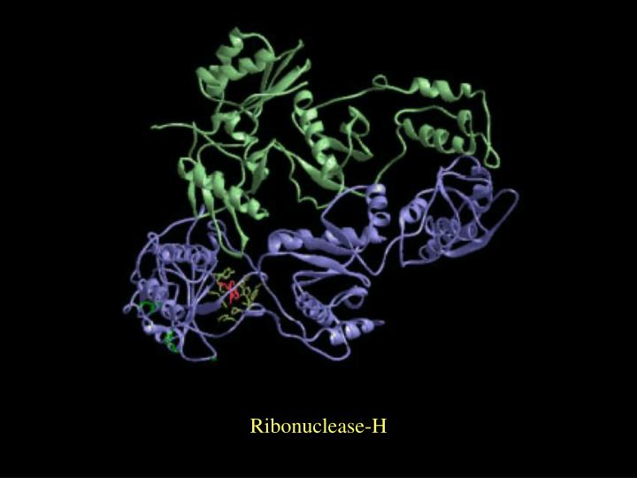 Ribonuclease-H
