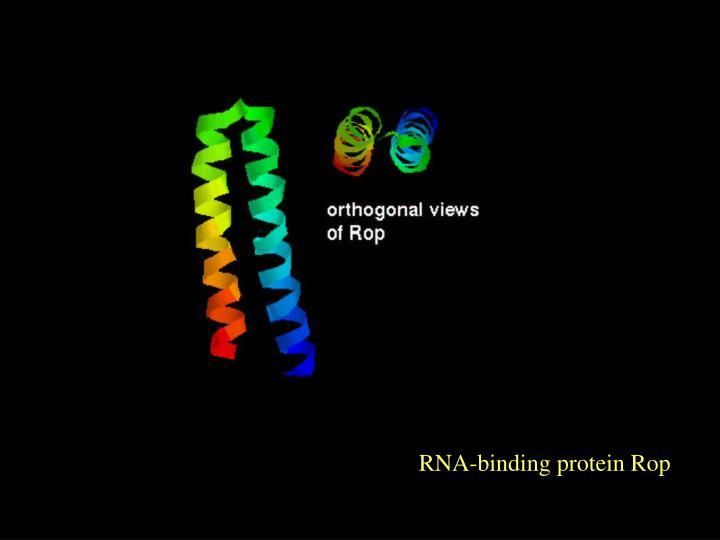 RNA-binding protein Rop