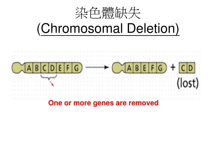 染色體缺失