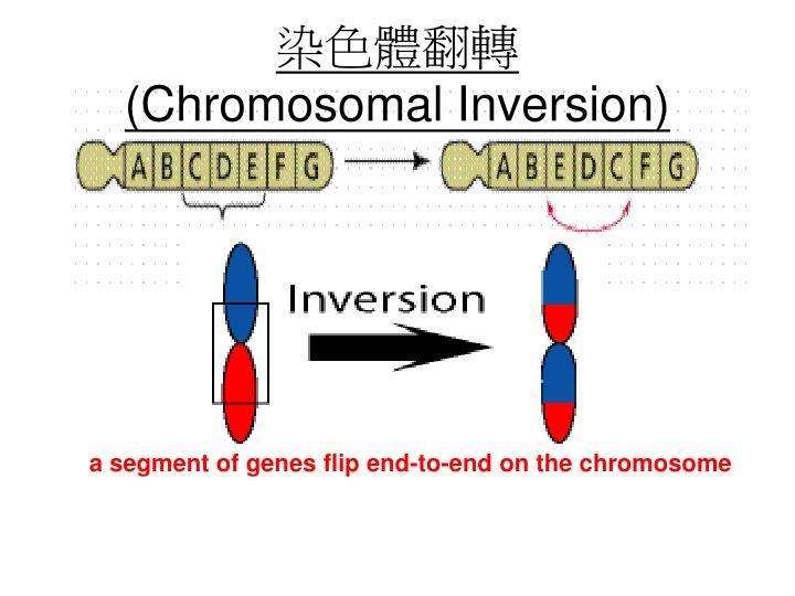 染色體翻轉