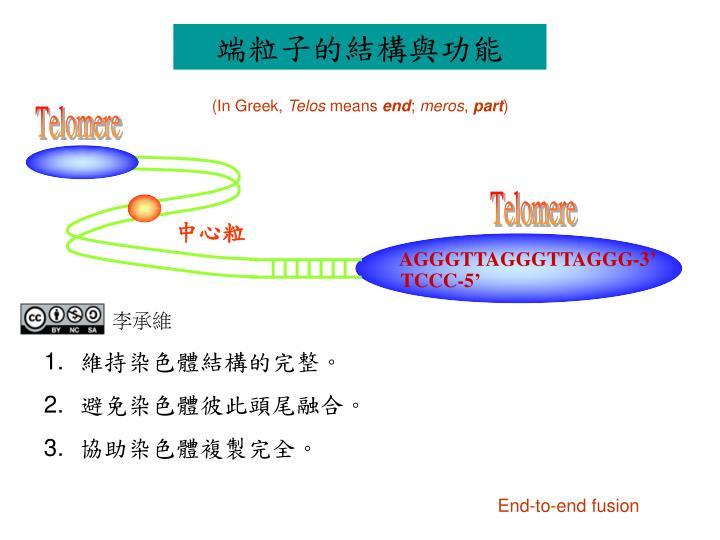端粒子的結構與功能