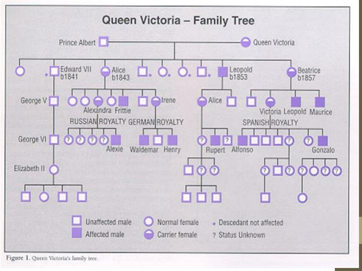 Royal Family Pedigree