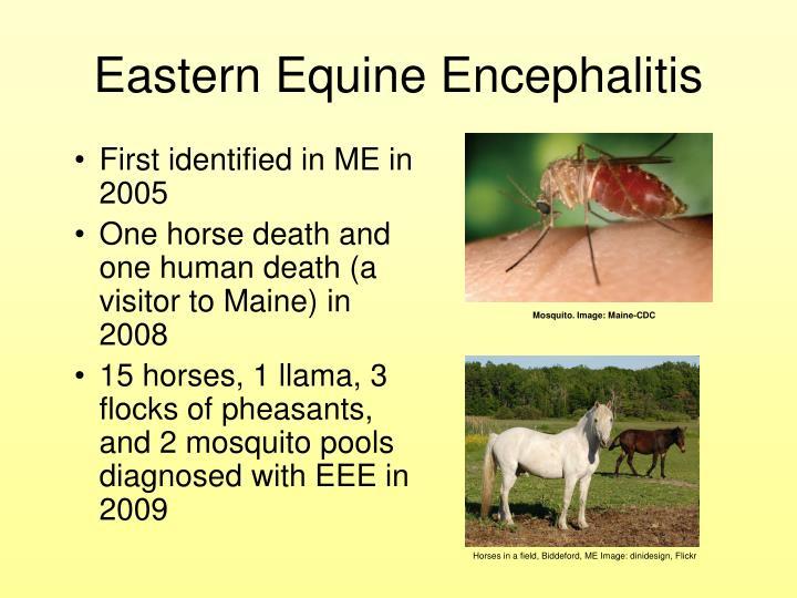 Mosquito. Image: Maine-CDC