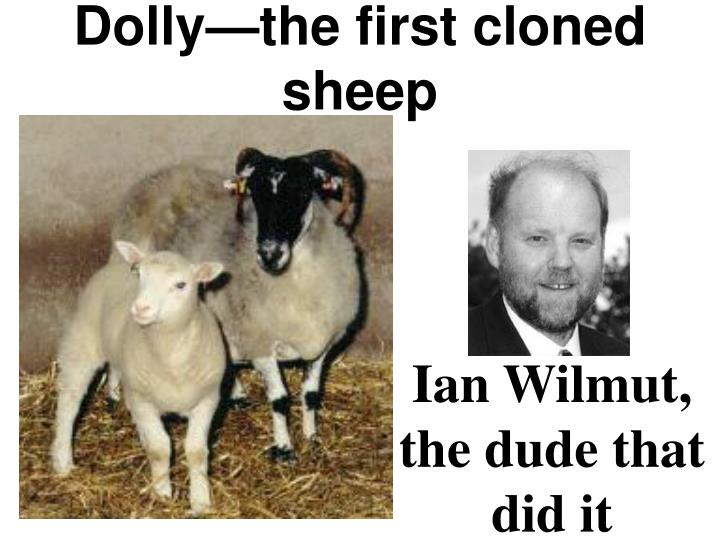 Dolly—the first cloned sheep