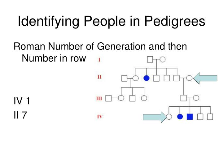Identifying People in Pedigrees