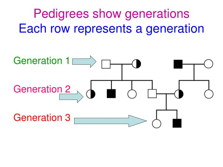 Pedigrees show generations