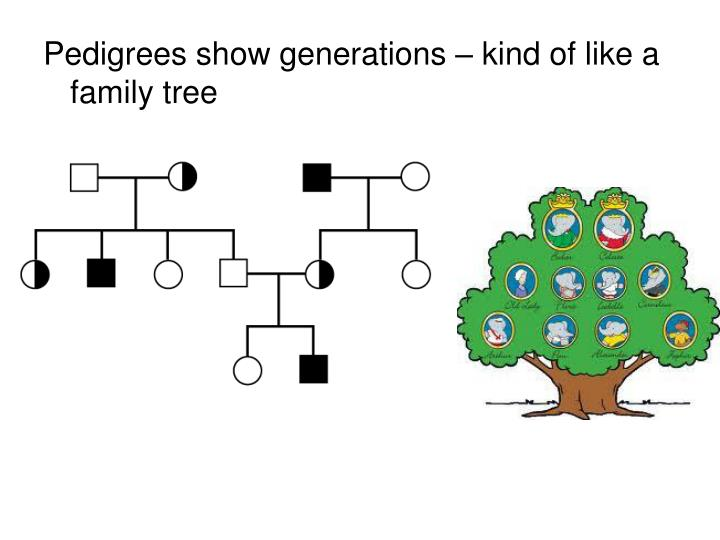 Pedigrees show generations – kind of like a family tree