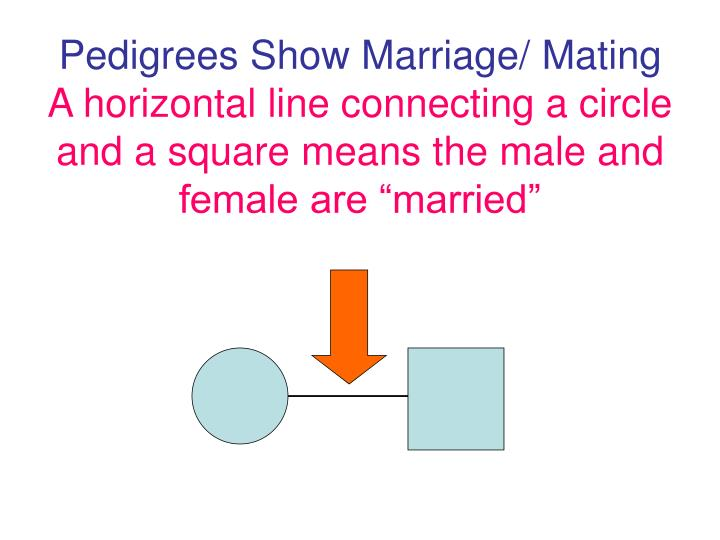 Pedigrees Show Marriage/ Mating