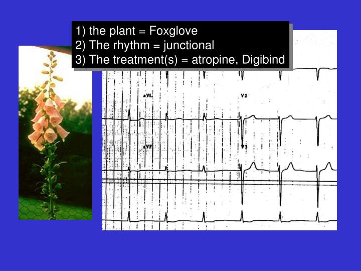 1) the plant = Foxglove