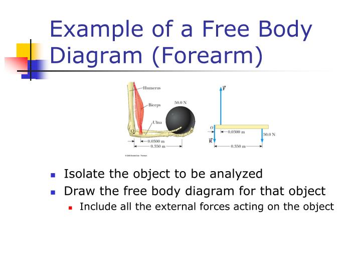 Example of a Free Body Diagram (Forearm)