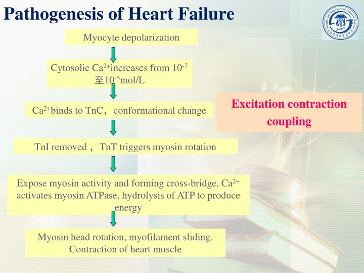 Pathogenesis of Heart Failure