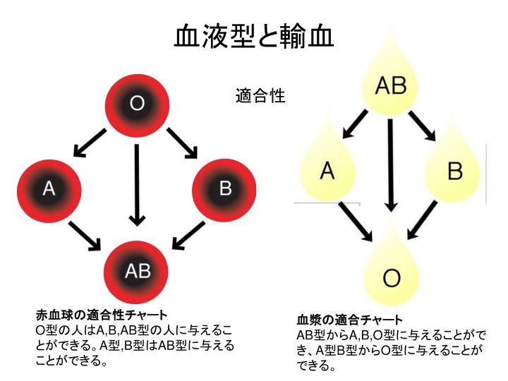 血液型と輸血
