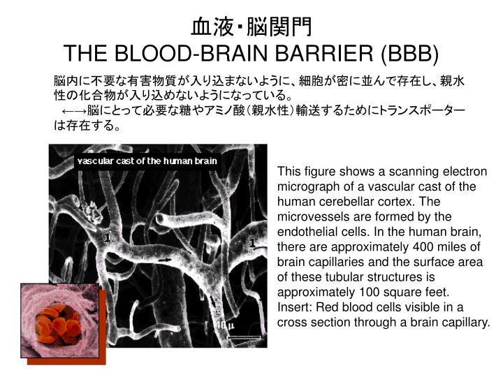 血液・脳関門