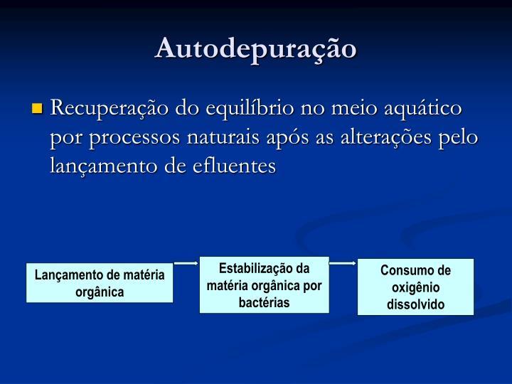 Estabilização da matéria orgânica por bactérias