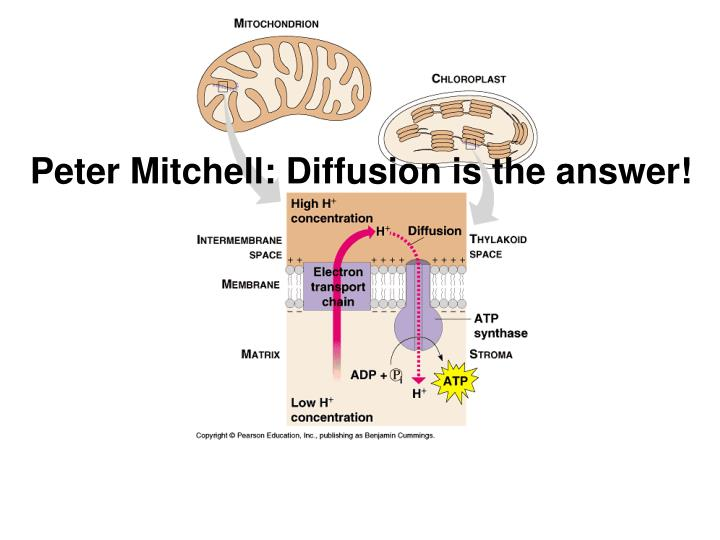 Peter Mitchell: Diffusion is the answer!
