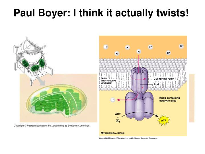 Paul Boyer: I think it actually twists!
