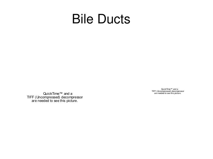 Bile Ducts