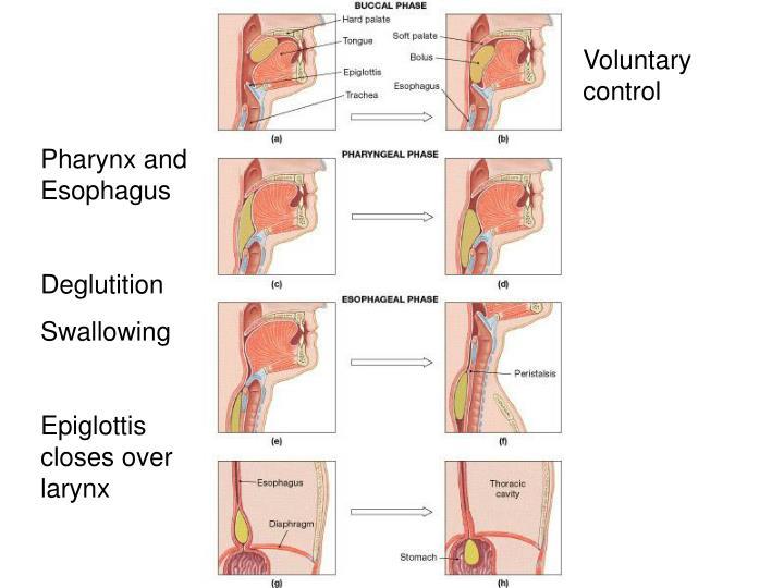 Voluntary control