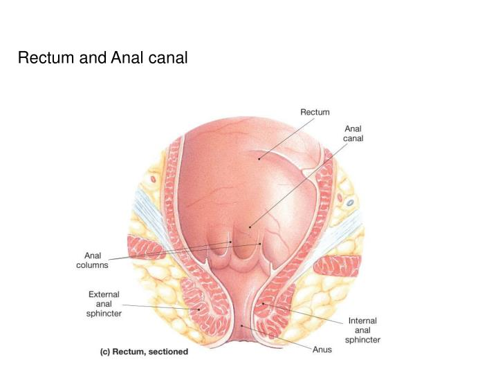 Rectum and Anal canal