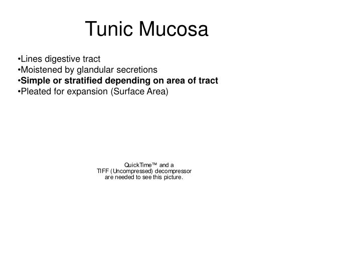 Tunic Mucosa
