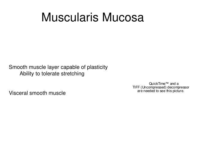 Muscularis Mucosa