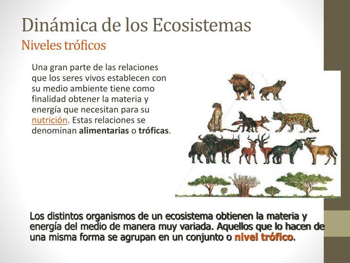 Los distintos organismos de un ecosistema obtienen la materia y energía del medio de manera muy variada. Aquellos que lo hacen de una misma forma se agrupan en un conjunto o